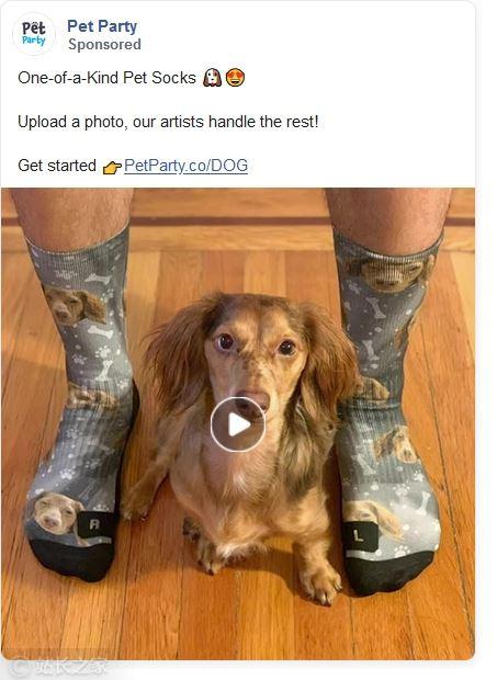 这位20岁小伙靠出售定制狗袜子赚了百万美元 凭什么?