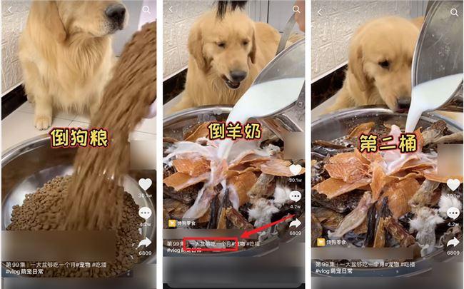 """吃播凉了,""""大胃王宠物""""还在被逼着捞钱"""