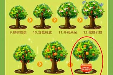 支付宝种果树得水果需要多长时间?种果树的攻略分享