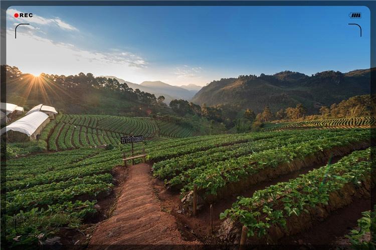 45岁的人,在农村承包了50亩土地,种什么能一年收入20万元