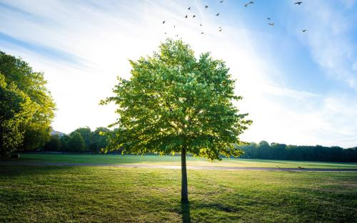 支付宝合种树别人能看到吗?如何获得阳光?