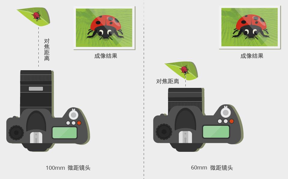 推荐微单微距镜头(微距镜头选择指南及测评)