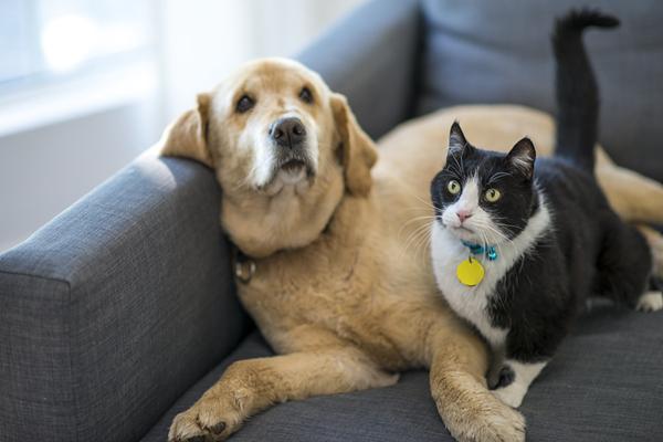 蛰伏12年的猫狗生意经:2000亿黄金市场,跑出宠物电商第一股!