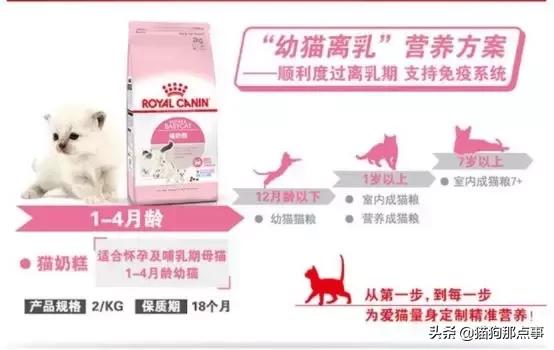 猫奶糕什么牌子好(分享皇家奶糕猫粮真实测评)