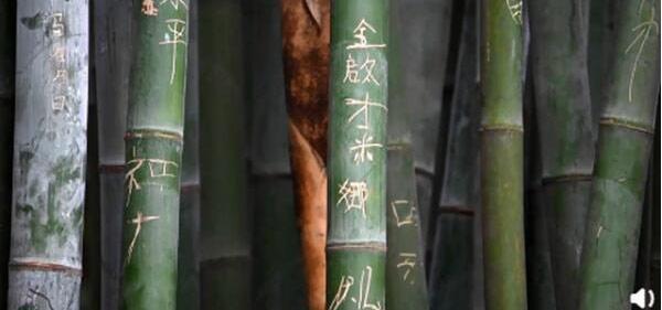 成都大熊猫基地景观竹遭游客刻划