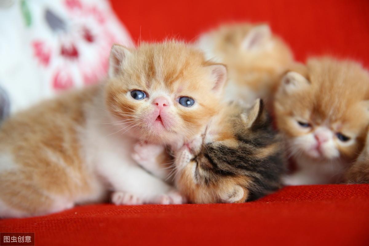 适合发关于猫的说说-猫能治愈一切唯美句子