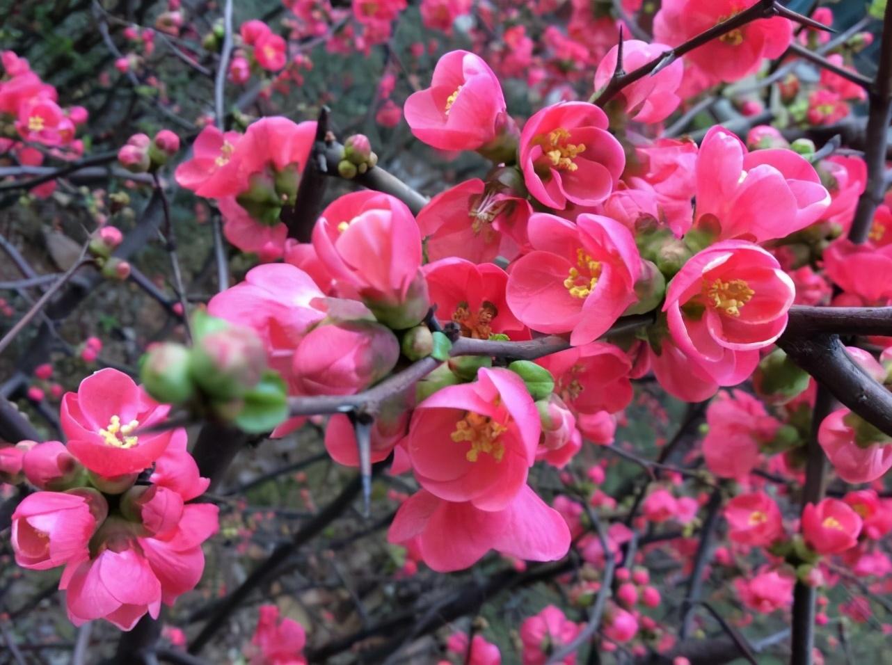 关于梅花的诗句古诗大全-歌颂梅花精神的诗句