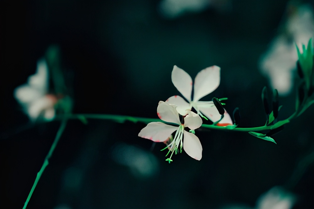 优美的田园诗句大全-摘抄意境唯美的9首田园诗