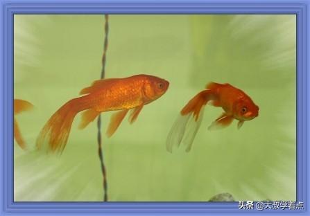 形容鱼儿在水中游的词-赞美鱼儿在鱼缸诗词