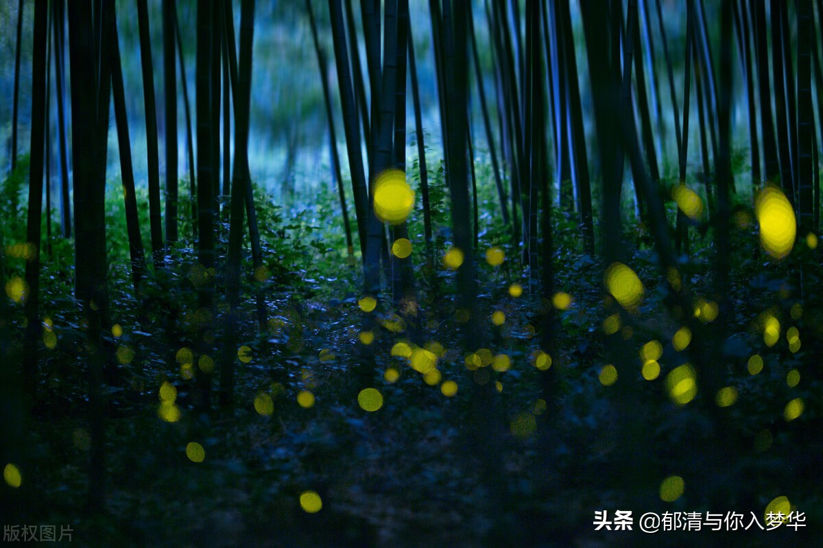 关于萤火虫的唯美句子-描写萤火虫的心情语录