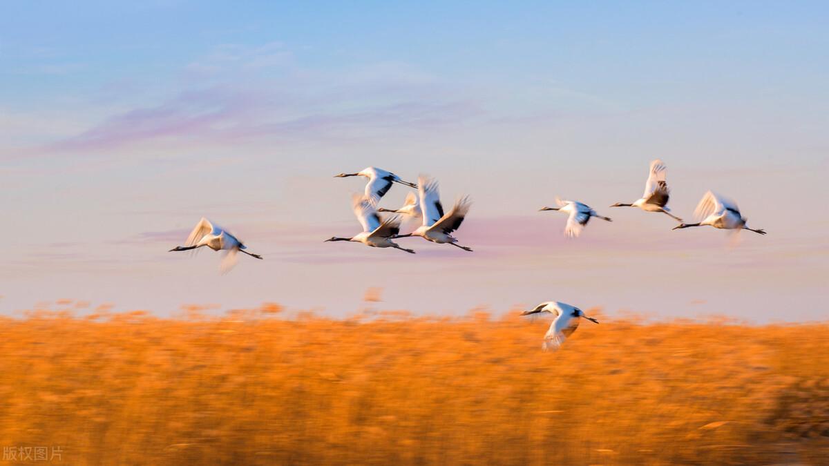 歌颂秋天的诗歌散文-关于描写秋天的诗歌