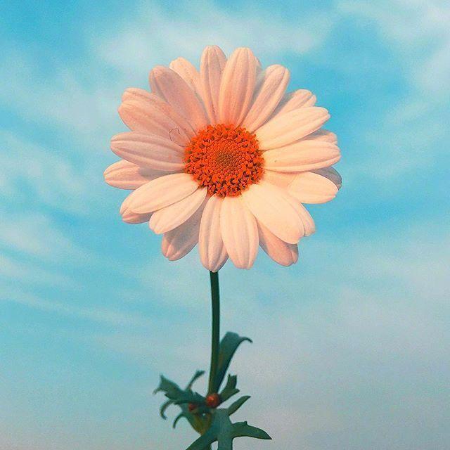形容笑容的句子唯美-赞美人笑得甜美的句子