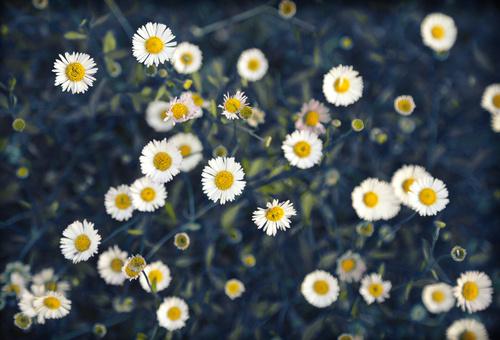 赞美花开的漂亮的诗-形容鲜花的浪漫古诗词