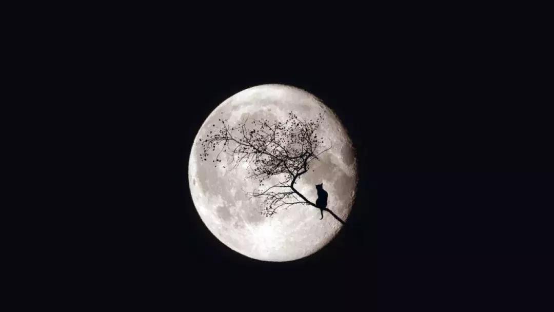 描写月的诗句有哪些-有关月的古诗词汇总
