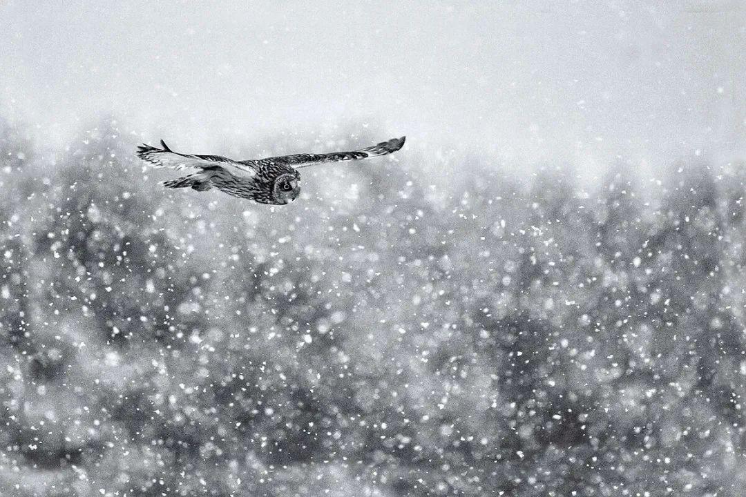 关于雪的诗词有哪些-赞美雪景的十首古诗词赏析