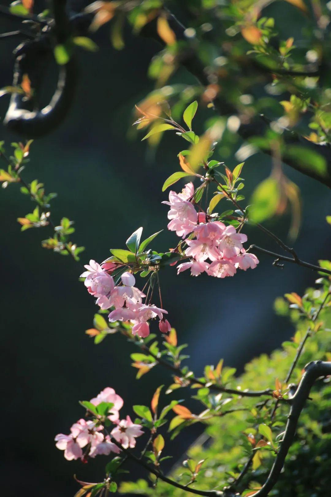 关于春天的词语和诗句有哪些-精选这12首春日古诗词