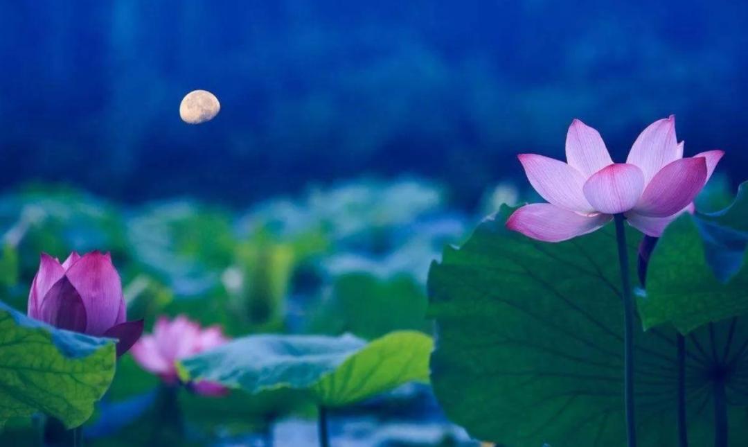 含有月亮的诗句有哪些-描写月色之美的10首古诗词
