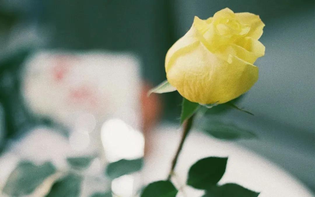 古代唯美情诗名句-最动人心的6首唯美情诗