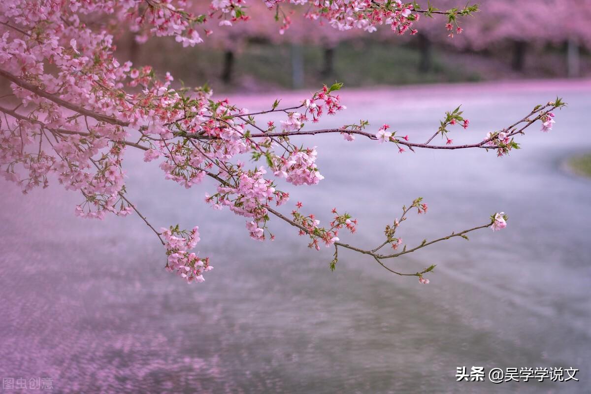 描写春天的优美短句-50句描写春天的优美句子