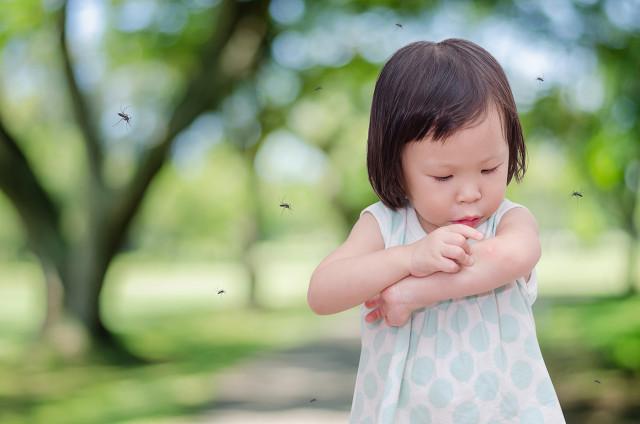 夏季蚊虫太讨厌,14个处理蚊虫的小窍门,让你轻松应对蚊虫叮咬