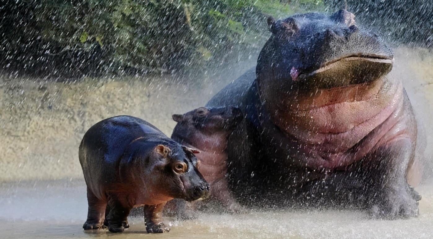 动物怎么度过暴雨?松鼠打起雨伞,大象丝毫不慌,猫头鹰哭了