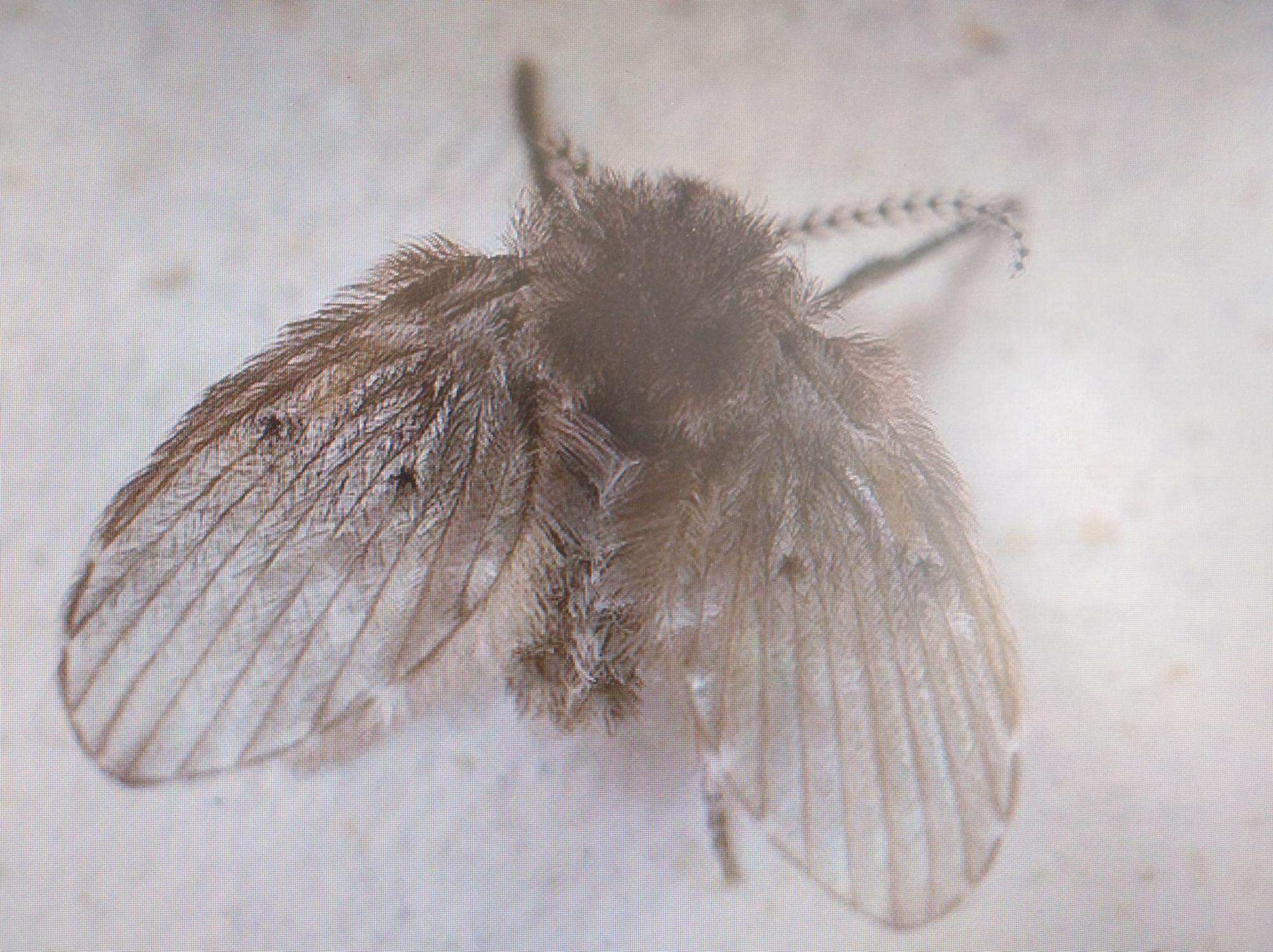 卫生间里的小飞虫是什么?只需三步,就能彻底杜绝