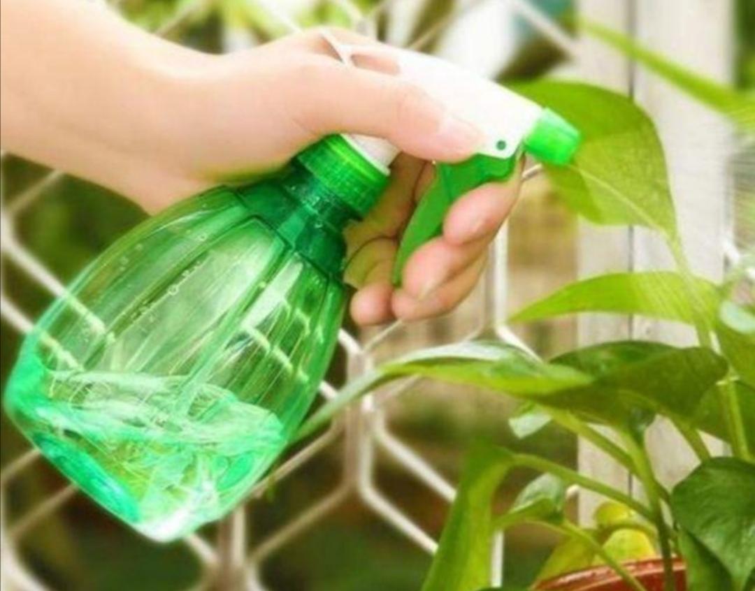 """花盆里出现小虫子,不用买杀虫剂,往里面扔点""""小东西""""就管用"""