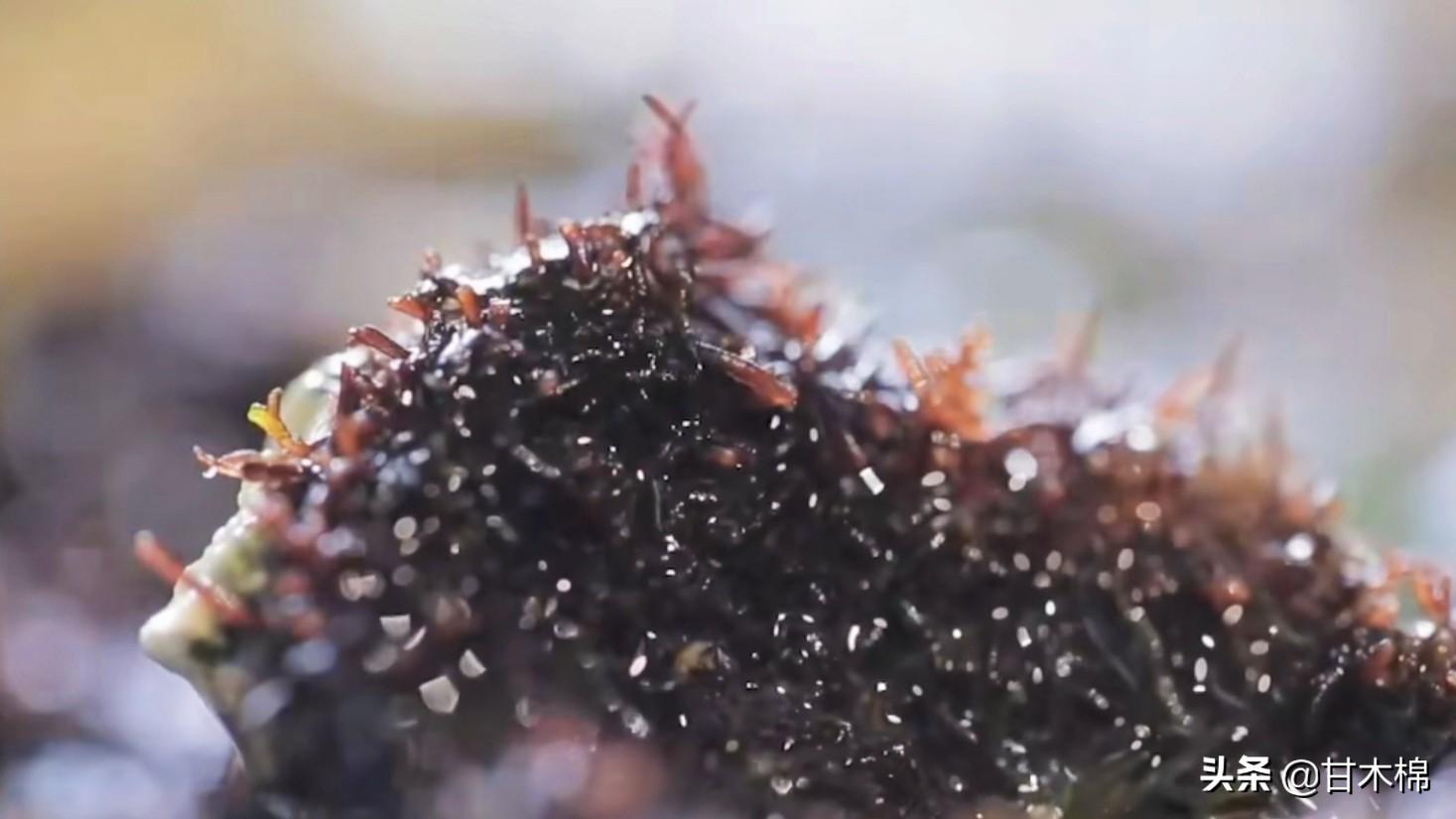 以下这些植物竟然是制作凉粉的原料?快来看看你认识多少种