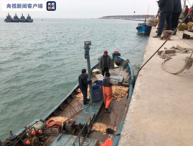 青岛胶州湾海星数量大幅减少 收购价上涨