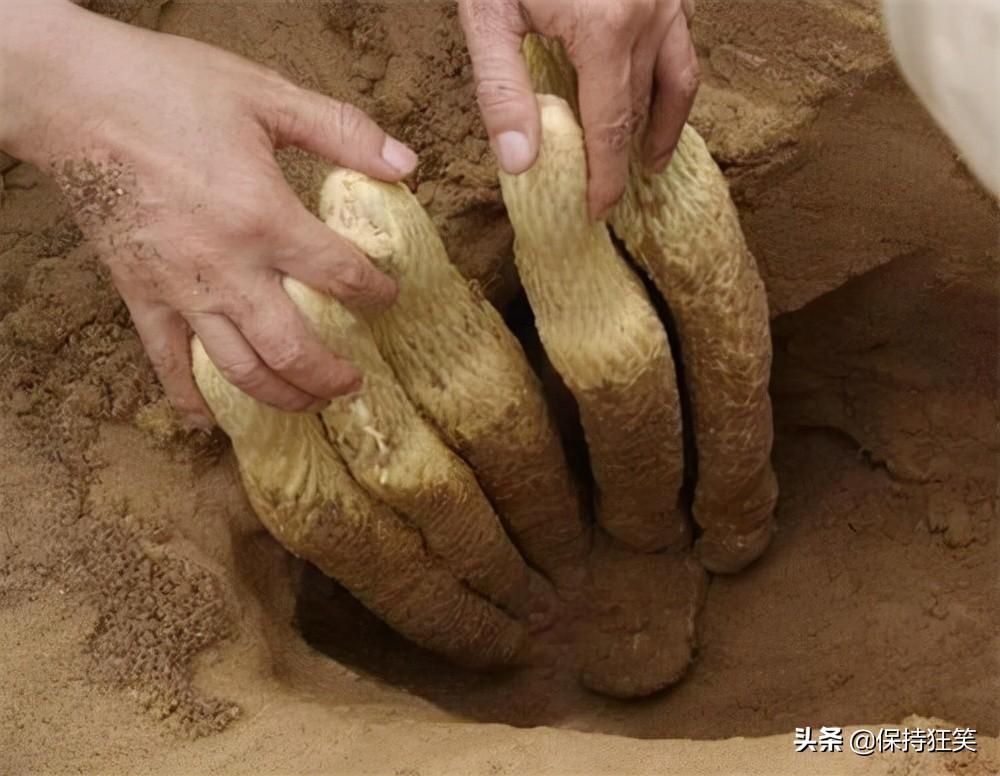 内蒙古十大特产 内蒙古有哪些特产 内蒙古著名特产排行榜