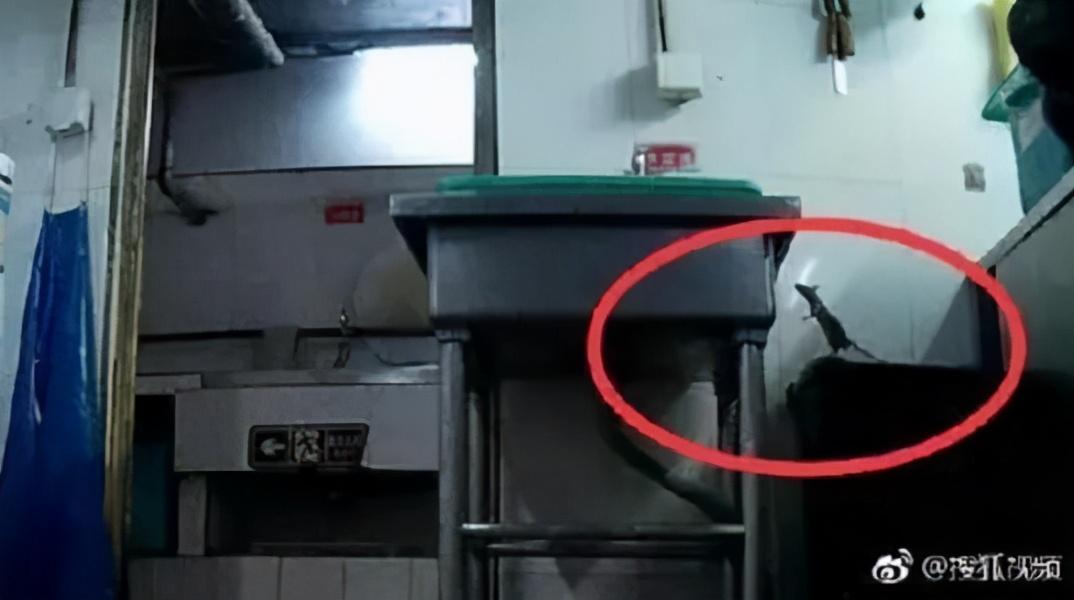 贵阳:火锅店老鼠乱窜;换做你会不会火冒三丈?做好4点科学防鼠